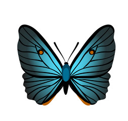 Butterfly with blue wings