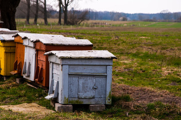 The image of colorful beehives