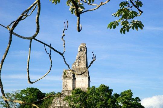 tikal mayan ruins jungle abstract