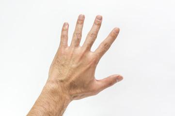 毛の濃い手