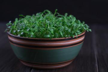 Fresh cress salad macro shot selective focus. cress sprouting ready for salad. Healthy vegetarian food.Fresh herbs.