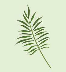 leave palm tropical natural vector illustration eps 10