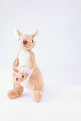 Kangaroo is standing on white background