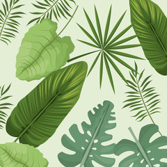 collection palm leaves natural vector illustration eps 10