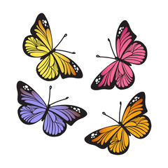 Stylized Monarch Butterflys isolated on white background set. Vector illustration