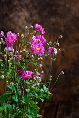 Wall Mural - Chinese anemones agains dark background