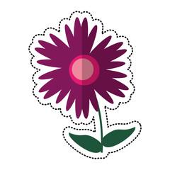 cartoon magnolia flower natural vector illustration eps 10