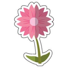 cartoon amaryllis flower natural vector illustration eps 10