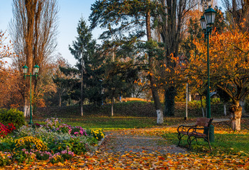 flower blossom in city park in autumn