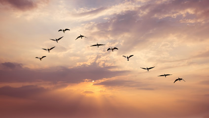 Printed roller blinds Bird Birds at sunrise or sunset nature concept