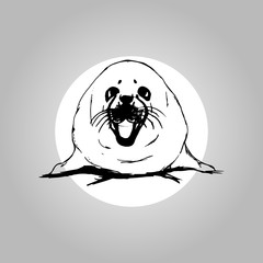 Belek is a baby seal on a white background, graphic, vector