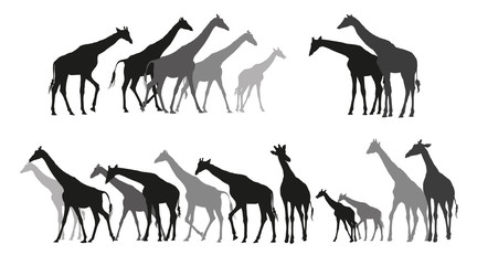 Group of black and grey silhouettes of giraffes
