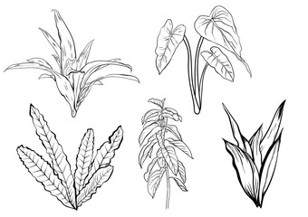 Tropical leaves, dense jungle. collection. hand painted pattern. Vector.