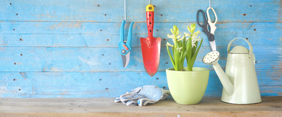 Gardening tools and young hyacinth flower. Panorama format, good copy space.