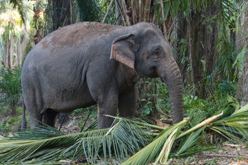 Elephant walk in the forest