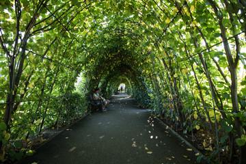 Canopy Garden