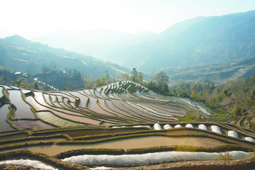 Poster de jardin Guilin Green planted mountain rice field seed bed landscape in China with nobody around during the day.