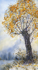 Watercolor landscape. The old tree in late autumn