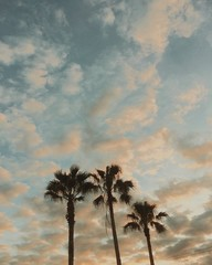 Palm trees and cloudy sky at sunset, low angle view