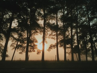 View of silhouetted trees during sunset