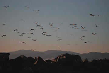 Flock of birds in flight over rock formations at sunset