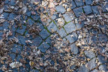 Road from paving stone with yellow leaves from above.