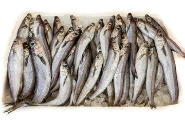 Blue whiting or Micromesistius poutassou fishes for sale in the greek fish market.