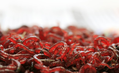 a bunch of small red mosquito larvae bloodworm is lying on a white background