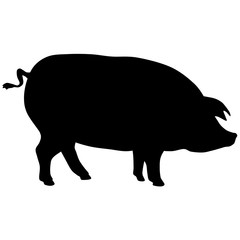 Black vector silhouette of pig