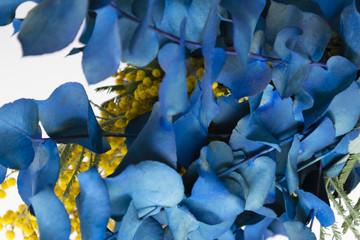 Blu leaves