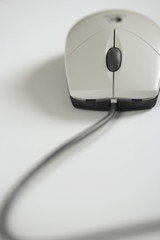 Close-up of a scroll mouse