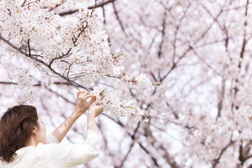 Young woman holding cherry tree branch