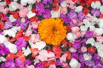 Wellness. Multicolor flowers in water