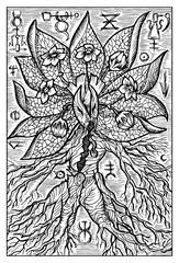 Mandrake or Mandragora. Engraved fantasy illustration. See all collection in my portfolio