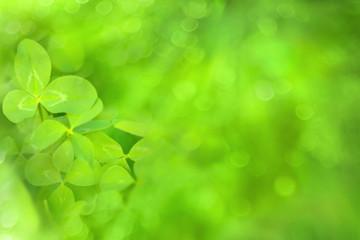 Clover leaf on green background.