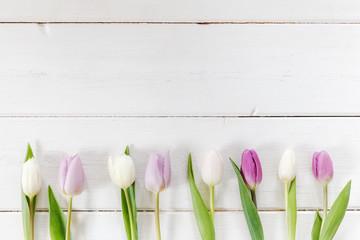 Weiße und violette Tulpen auf weißem Holz