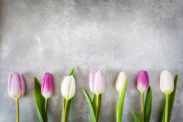 Weiße und violette Tulpen auf Metall-Hintergrund