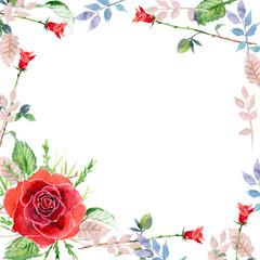 Scarlet rose, watercolor, greeting card