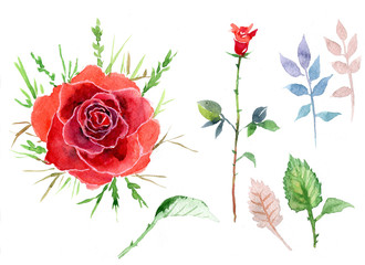 Scarlet rose, watercolor, greeting card