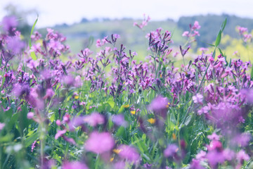 abstract photo of spring meadow with wildflowers