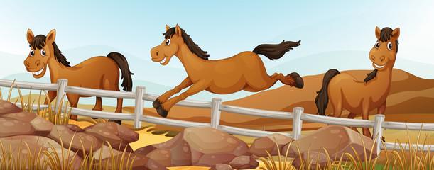Three horses in the field