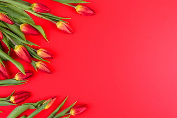 Spring flowers tulips frame on red background