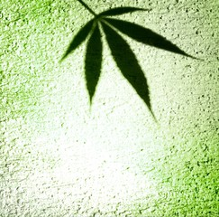 Marijuana shadow silhouette on green gradient wall surface background