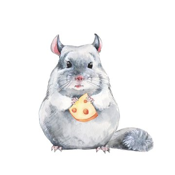 Chinchilla and cheese. Watercolor illustration, hand-drawn cute mouse