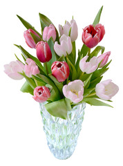 tulips in vase isolated