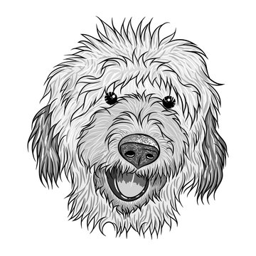 Portrait of  Labradoodle. Hand drawn dog illustration. T- shirt and tattoo concept design in black white. Vector.