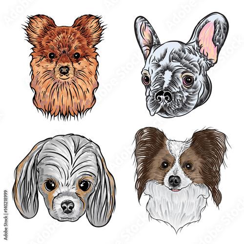 Great Papillon Canine Adorable Dog - 500_F_140218999_qP79gU5CAWxqE9cTJH5g88cbXm9aDGet  2018_797891  .jpg