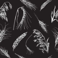 Vector illustration sketch - autumn. hand drawn cereal crops sketches.