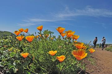 Wild Spring Flowers - Yellow