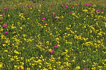 Wild Spring Flowers - Yellow and Purple